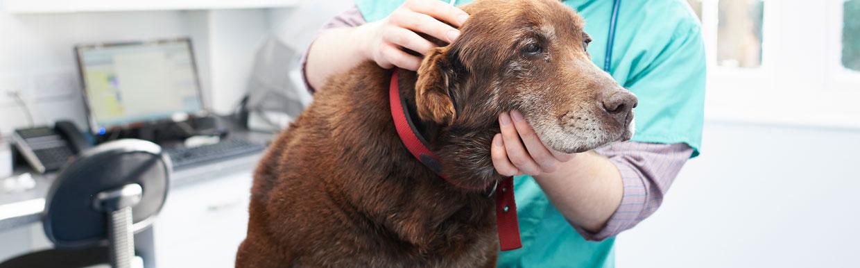 Flea control in dogs