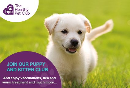Join the Healthy Pet Club puppies today